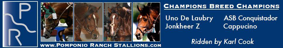 Pomponio-ranch-stallions-ad